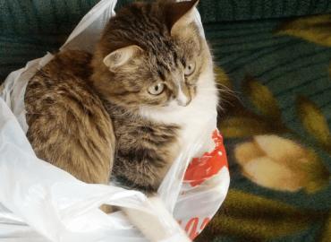 Voorkom dat je bij een carrièreswitch een kat in de zak koopt